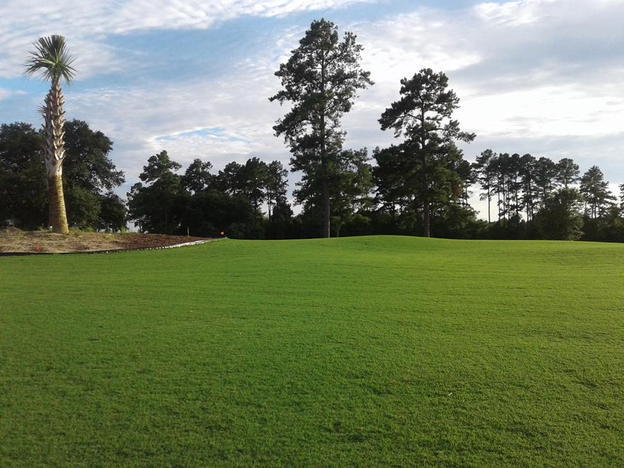 Palmetto Traverse, golf
