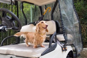 Dog-Friendly Golf Courses to Travel To